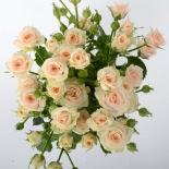 Роза спрей Jana (Яна)