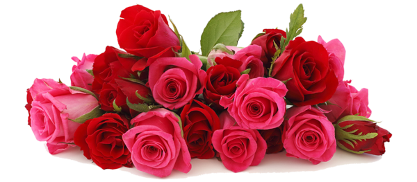 Beautiful-Roses-e1470692121809.png