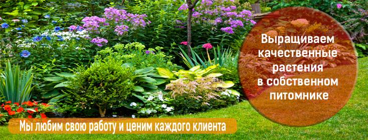 Плантомания Интернет Магазин Растения
